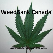 Weed Bank Canada Premium Cannabis for sale