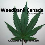 www.weedbankcanada.com